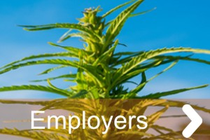employers cannabis industry work